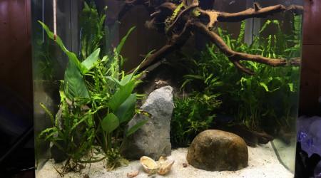 aquarium Aqua saumatre 1