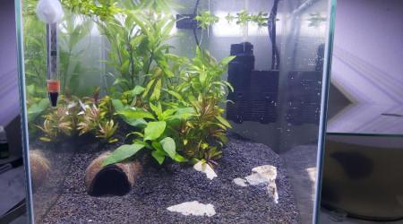 aquarium Bac 22l Combattant Male