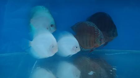 aquarium Bac de quarantaine