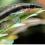 olivier-burdy