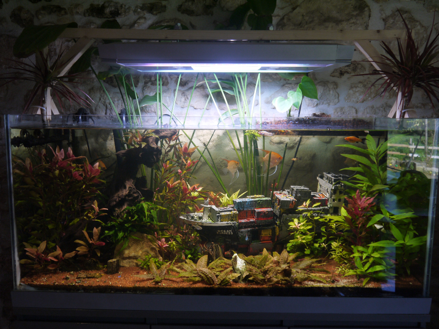 Nouvelle Photo De Mon Aquarium B 350l B