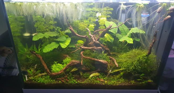 Le Bac au 11 Novembre Très bonne pousse des plantes, uniquement la Marsilea crenata rencontre des difficulté.