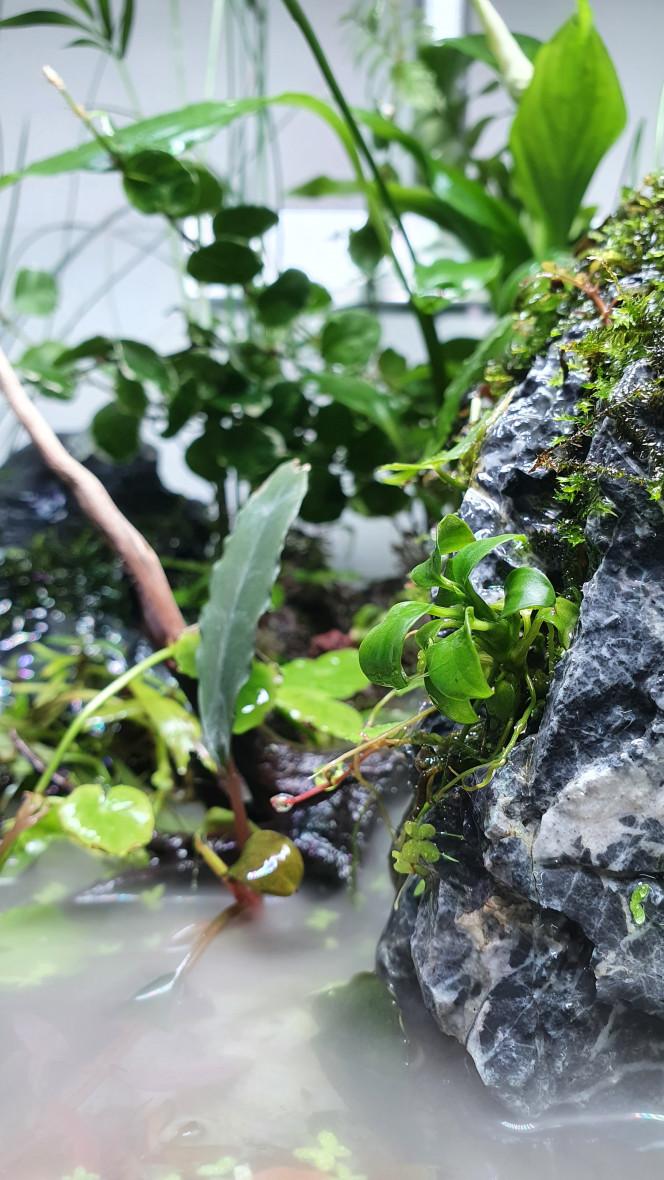 30l cascade Le 30l cascade est presque finis, quelque révisions a faire sur la surverse cacher derrière et quelque plantes à rajouter et ce seras plutôt pas mal :)