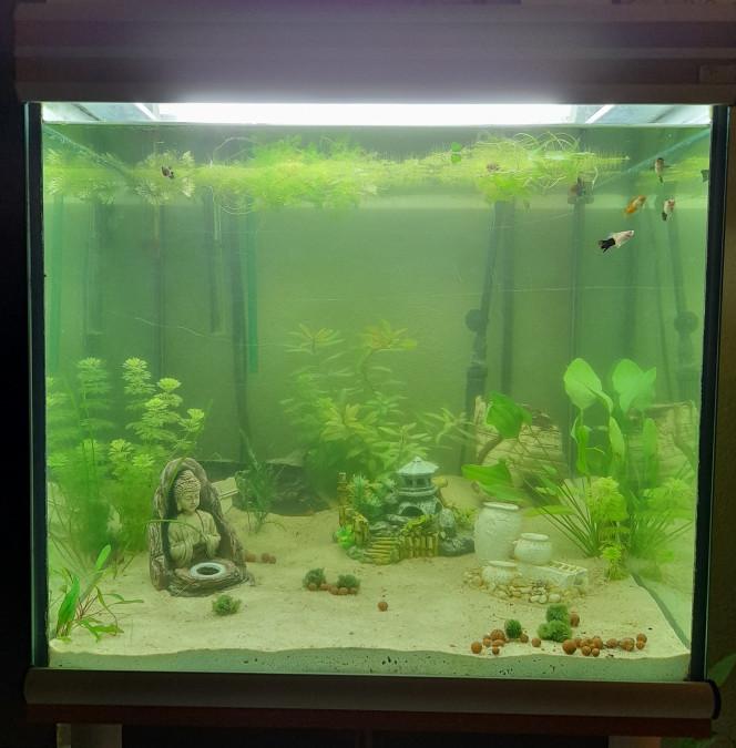 Nouvel aquarium Je suis passée à l'étape supérieure dans ma passion avec un 300L. Je me demande si j'arriverais à m'arrêter mdr.