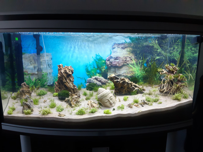 New Asia Mise en place du décor et des plantes. Mise en eau et mise en place des appareils.