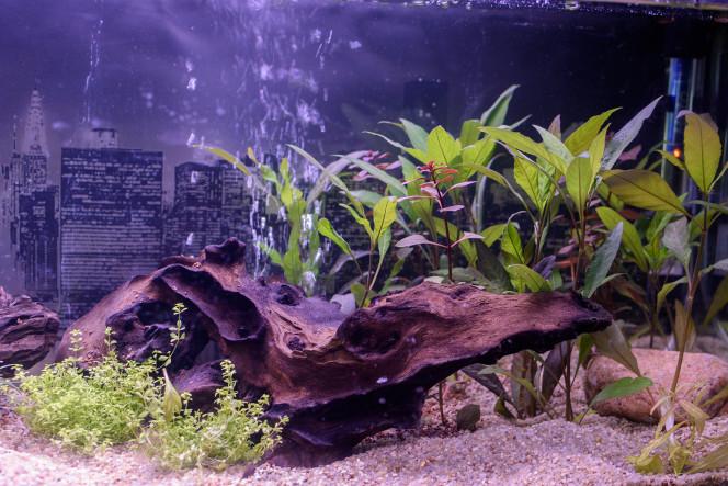 Plantes jour 5 . cycle de l'azote
