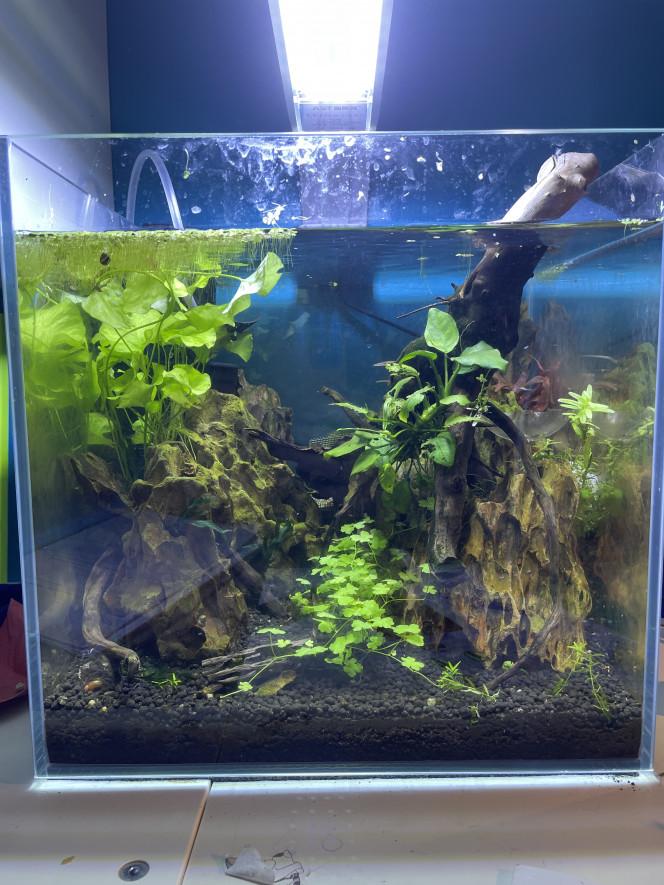 Changement de décor et d'aquarium