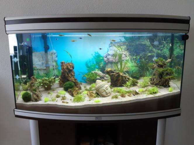 New Asia Mon aquarium au biotope asiatique pur.