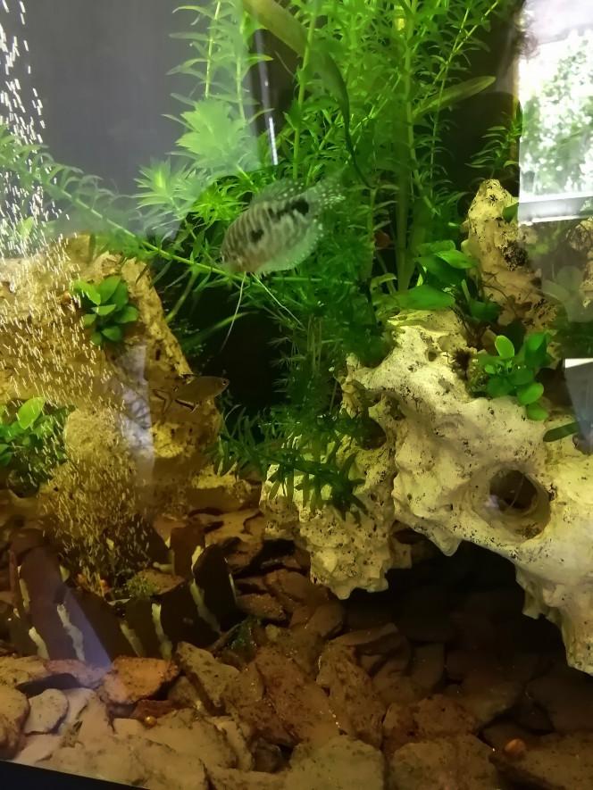 Disparition des algues, bac tout propre ou presque...