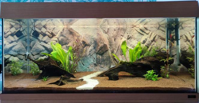 Biotope Amazonien Lowtech 1 Photo après mise en eau, avec flore, sans poissons