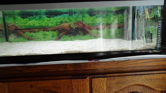 Nouvelle photo de mon aquarium Nouvel aquarium en cours de cyclage