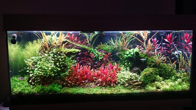 Juwel rio 180 De plus en plus beaux et les couleurs sont magnifiques et deux tailles de plantes
