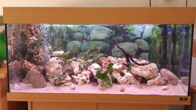 Rio 180 Tanganyika Spécifique...4 brichardis.  2 crevettes  japonica survivantes dun autre bacs