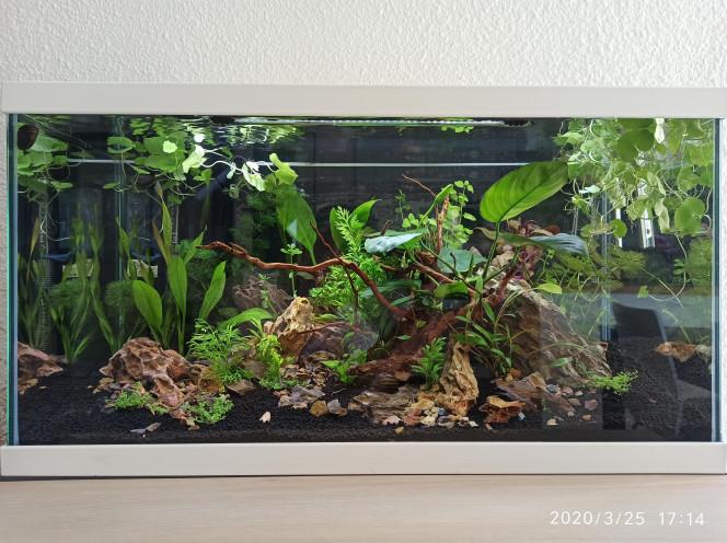 J+20 Quelques bouturages, quelques tailles et déplacement de plantes. Pas d'algues si ce n'est sur les grandes feuilles de l'anubias trop proche la lumière je pense, et un peu sur la vitre : nettoyé a la main.