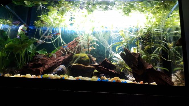 Aqua 10 Mon tout premier aquarium. J'avais commencé avecdes plantes de plastique. C'était plutôt vilain mais ça m'a donné la piqure.
