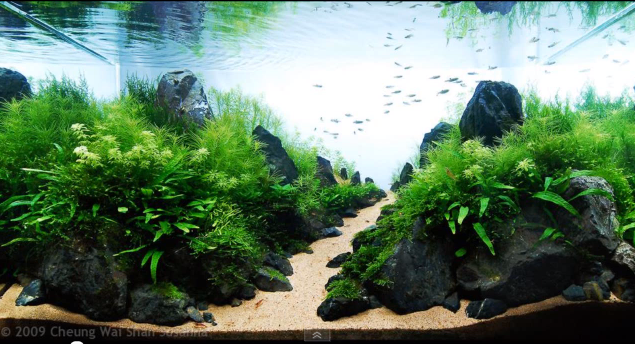 aquascaping chemin
