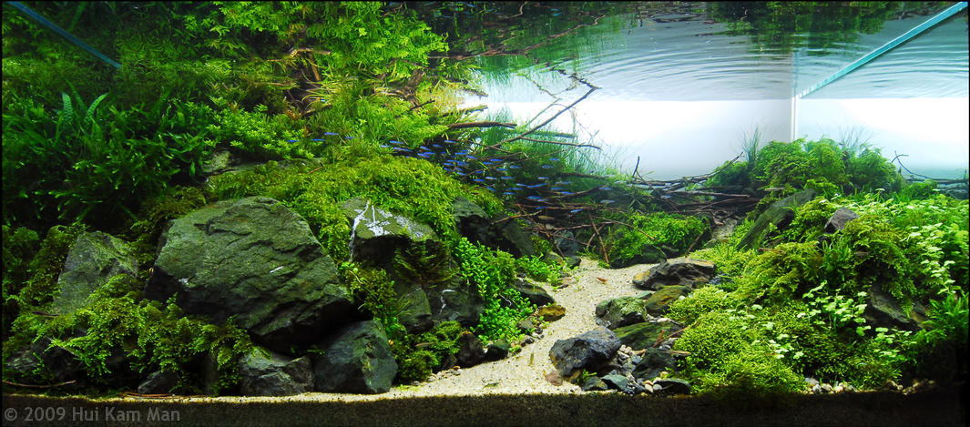 aquascaping pierres