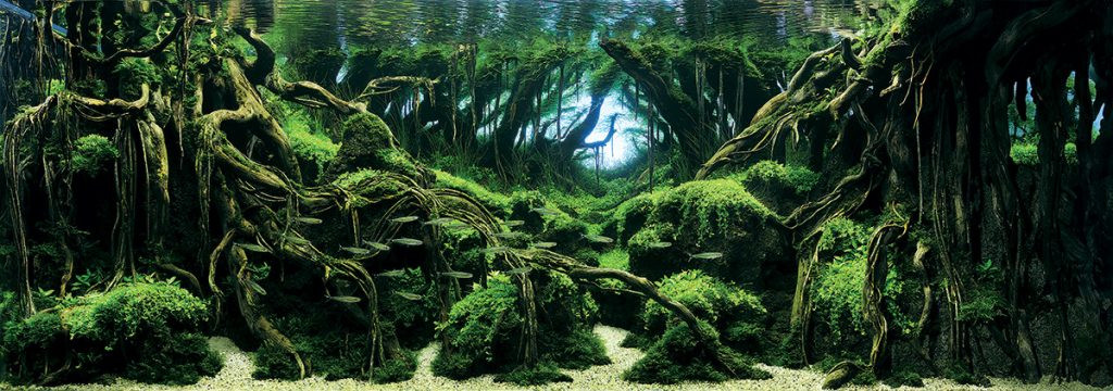 aquascaping style jungle