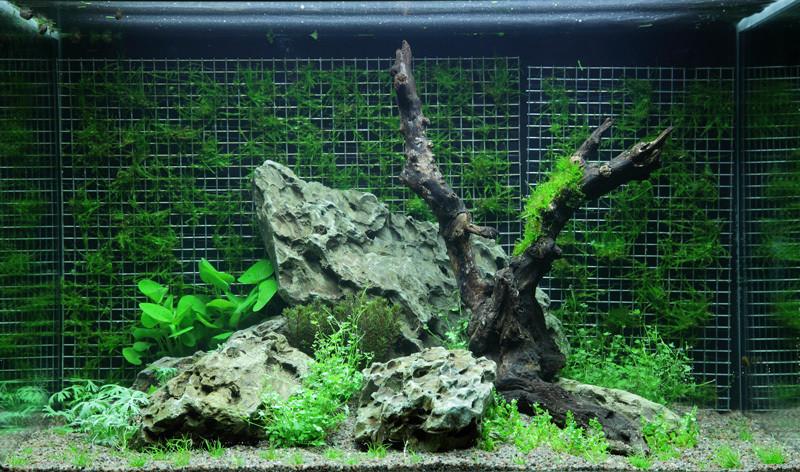 Mousse sur paroie aquarium, mur