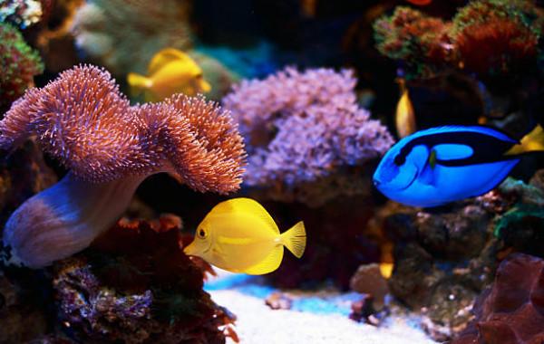 Achat en ligne Poissons d'eau de mer