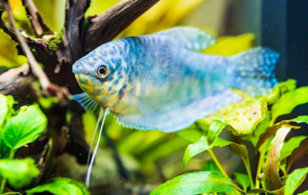 Acheter poissons d'eau douce chaude pas cher sur la boutique en ligne