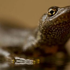 Acheter amphibiens & urodeles pas cher