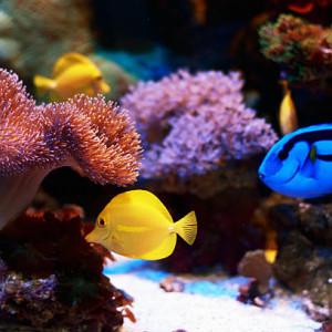 Acheter poissons d'eau de mer pas cher