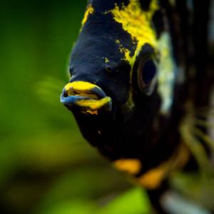 Acheter poissons pas cher