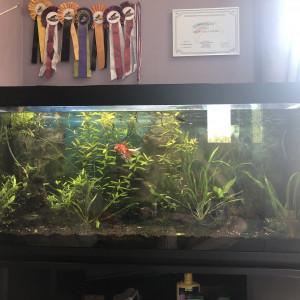 Aquarium 250L à vendre