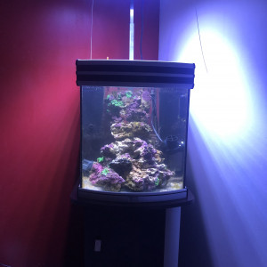 Aquarium marin complet avec pierres