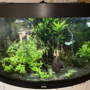 Vend aquarium juwel trigon 350