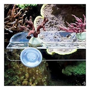 Utilitaire à bouture de coraux Dupla CORAL RACK L 15 trous
