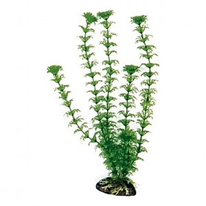 Plante artificielle Cabomba 18cm