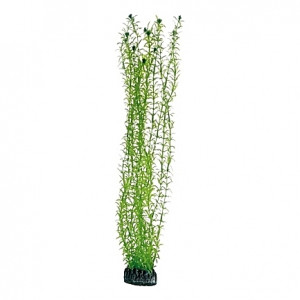 Plante artificielle Lagarosiphon 60cm
