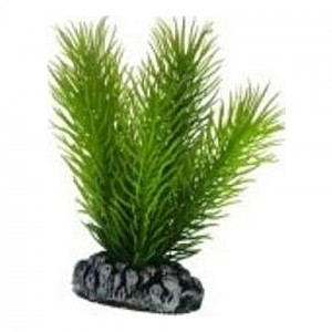Plante artificielle Mayaca 7cm