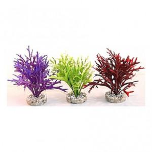 Plantes Water Fern Medium 22cm
