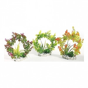 Plantes arches 22cm