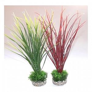 Plantes Acorus Medium 28cm