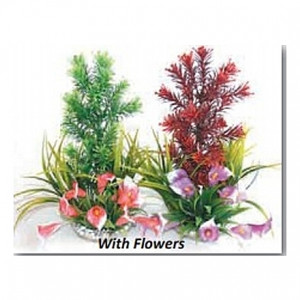 Plantes paradis avec fleurs 28cm