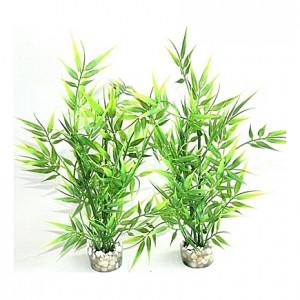 Bamboo plantes 25cm