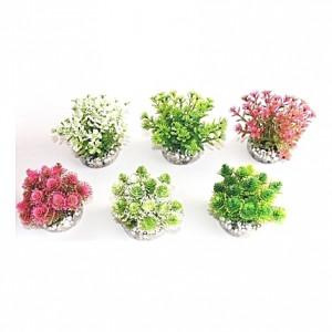 Petites plantes naturelles et colorées 9cm