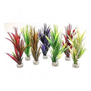 Plantes colorés fines cyperus 20cm