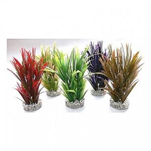 Plantes colorés larges cyperus 20cm