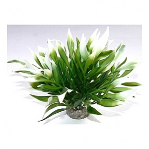 Plante, longues feuilles 12cm
