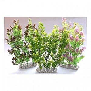Plantes buissons 35cm