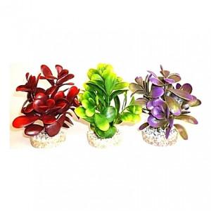 Plantes sur galets 14cm