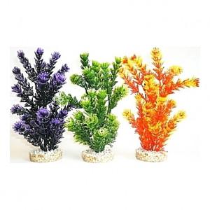 Plantes colorées 24cm
