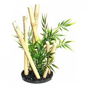 Jardin de bamboo 24cm