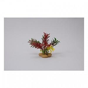 Assortiment de plantes 10cm
