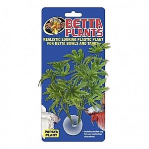 Plante papaye sur ventouse